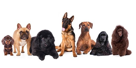 Introduction to Basic Dog Care tickets