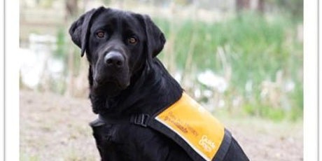 Winter   School Holiday Program - Guide Dog Experience tickets