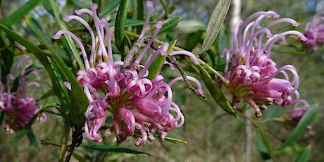 Gardening with Australian Native Plants tickets