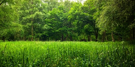 Forest Bathing at Hatfield Forest tickets