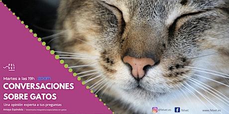Conversaciones sobre gatos - Una opinión experta a tus preguntas gatunas bilhetes