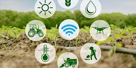 Internet de las cosas en el campo español: IoT en la agricultura entradas