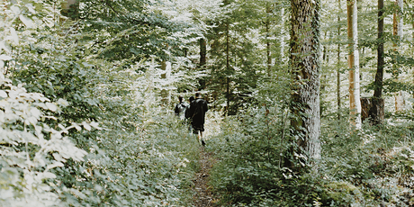 Forest Therapy Walk tickets