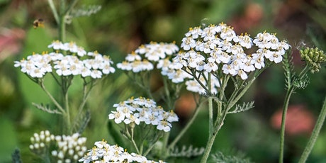 Who's in Season? – Working with Medicinal and Edible Plants (Online) tickets