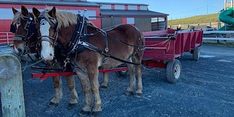 Bubble  Horse Drawn Wagon Ride tickets