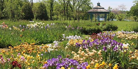 Iris and Peonies at Laking Garden tickets