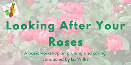 Looking After Your Roses tickets