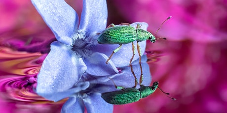 Macro Photography: The Universe at Our Feet tickets