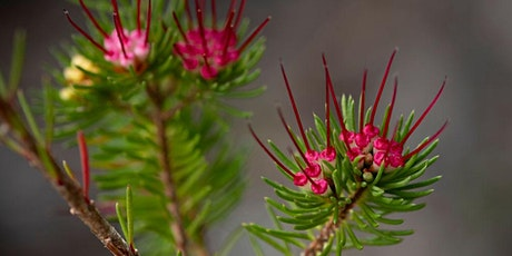 Native Plant ID for Beginners tickets