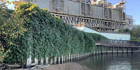 Kudzu Removal on the Power Plant Bridge - Meet on the Trail tickets