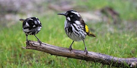 Bird Buddies National Tree Day tickets