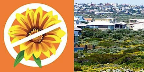 Gazania-free gardens Henley Beach – native coastal plant giveaway tickets