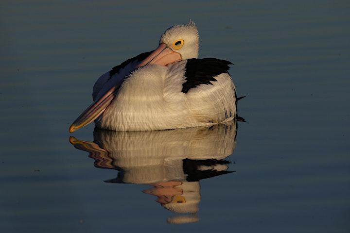 Bird Buddies National Tree Day image