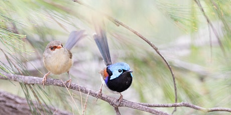 Introduction to the Aussie Backyard Bird Count tickets