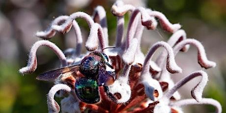 Spring Wild Pollinator Count tickets