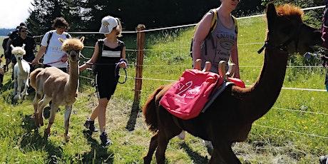 Trekking dolomitico con gli alpaca biglietti