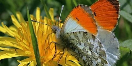 Beginners Butterfly Identification tickets