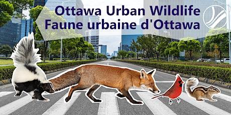 Ottawa Urban Wildlife: Biodiversity of animals in Ottawa tickets