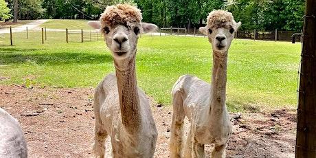 Creekwater Alpaca Barn Tour tickets