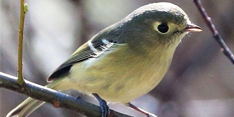 Bird Song in High Spring tickets