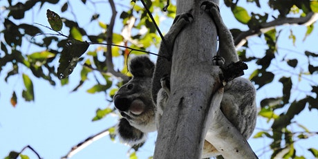Gum trees and their friends - a family friendly investigation walk tickets