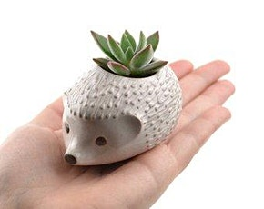 MAKE YOUR OWN HEDGEHOG PLANT POT - POTTERY CLAY WORKSHOP tickets