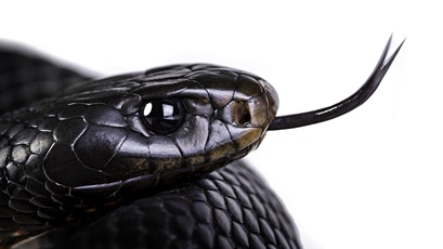 Wildlife Talk - Fraser Coast Snakes presented by Chris Muller tickets