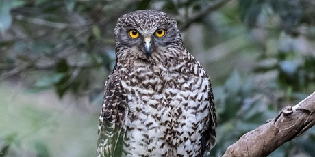 Talking Birds- Suburban Nocturnal Birds tickets