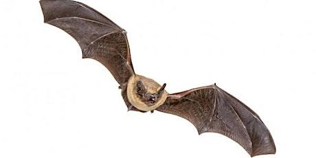 Bat Identification Online Training - RESCHEDULED tickets