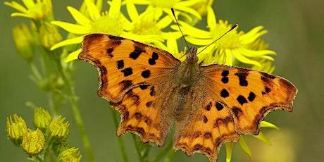Butterfly Walk- Ruislip Woods Trust tickets