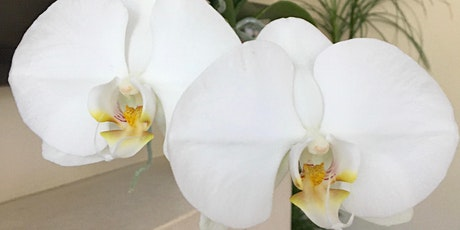 Orchid Care Workshop tickets