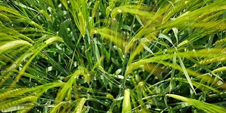 Barley Varieties – The Recommendation System tickets