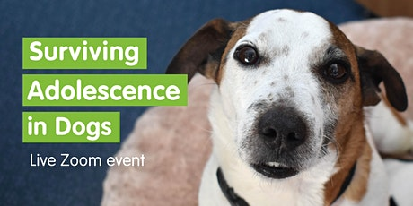 Surviving Adolescence in Dogs  - Live Zoom Event tickets