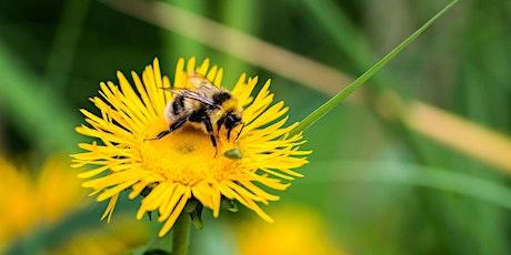 Bumblebee Workshop tickets