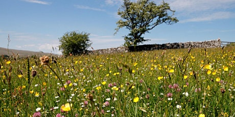 Making Meadows: Restoring Vital Habitat at Bowber Head Farm tickets