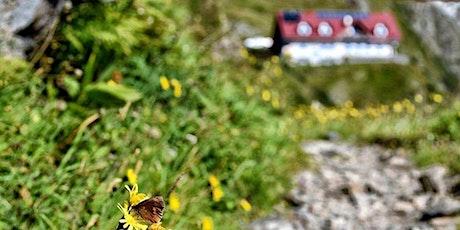 Trekking nelle verdi montagne della Carnia: Rif. MARINELLI Cima PLUMBS biglietti