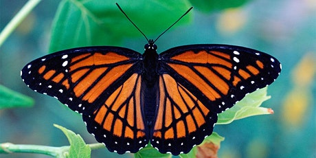 Interesting Insects: Butterflies & Moths tickets