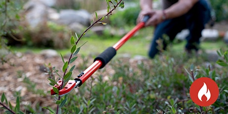 Pruning and Maintenance for Wildfire Resilience tickets