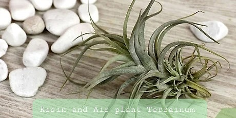 EcoCentric Resin and Air Plant workshop tickets