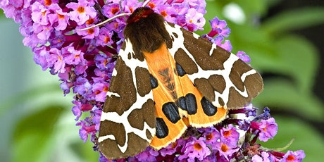 Wilder Futures for Warwickshire: Moths Webinar tickets
