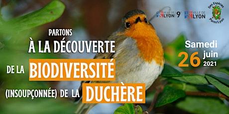 A la découverte de la biodiversité de la Duchère  #Les oiseaux billets