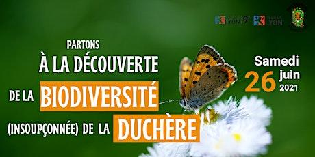 A la découverte de la biodiversité de la Duchère  #plantes&insectes billets