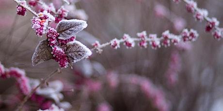Winter Breath and Meditation Workshop Tickets