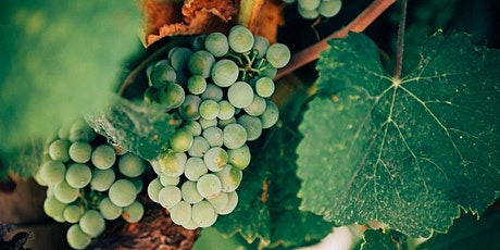 Let's keep it au naturel - Natural Wine Tasting Evening tickets