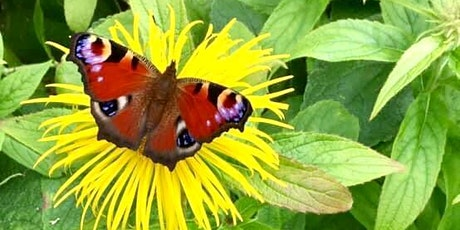 Helping Biodiversity in our Homes and Communities tickets