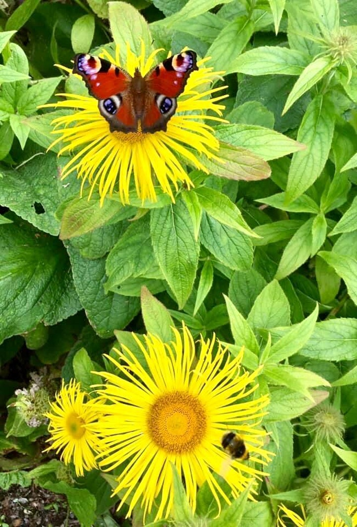 Helping Biodiversity in our Homes and Communities image