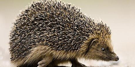 Meet a Hedgehog tickets