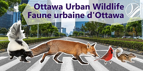 Ottawa Urban Wildlife: Connecting to Nature – Backyards and Beyond tickets