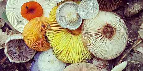 Fungi for Natural Dyes tickets