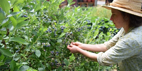 Virtual Homesteading: Preserving Your Harvest through Drying tickets